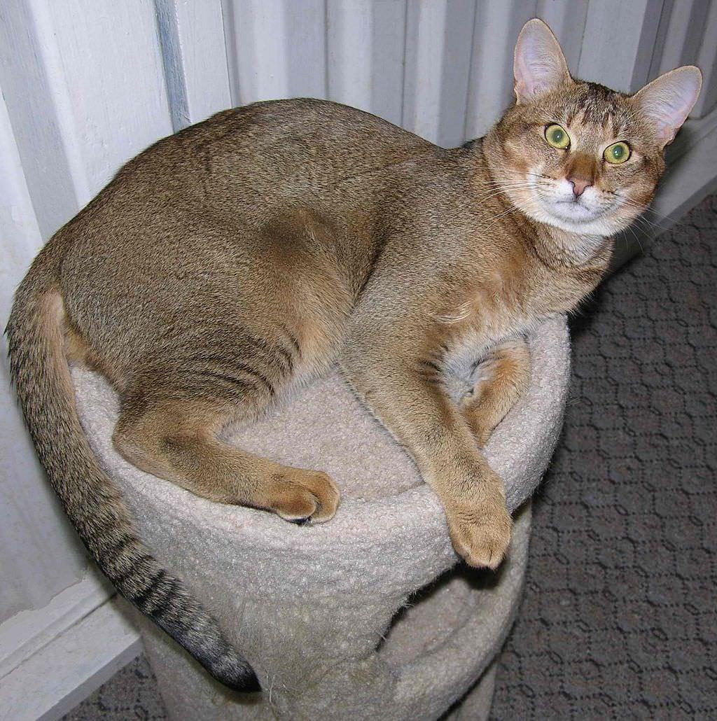 feline elderly care