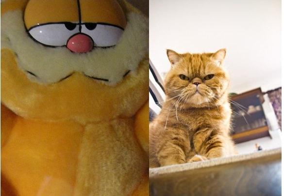 Garfield Iheartcats Com