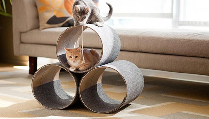 where do house cats live