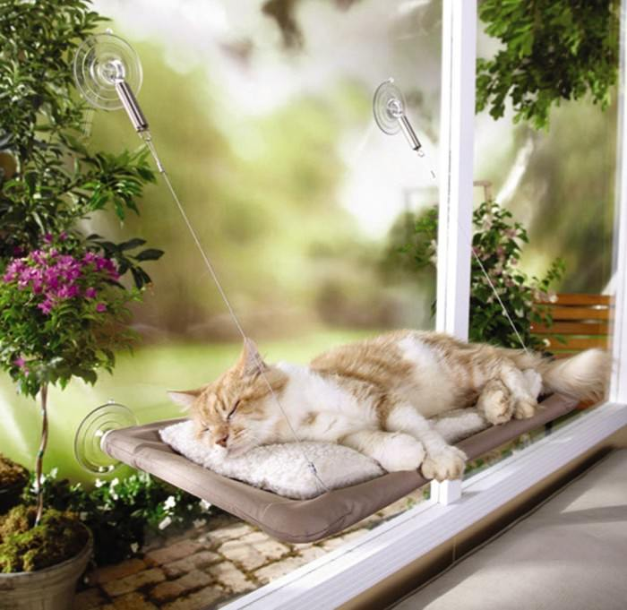 Adding Living Space For Your Cat