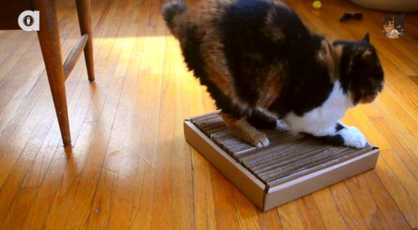 Easy To Make Diy Cardboard Cat Scratcher Iheartcats Com