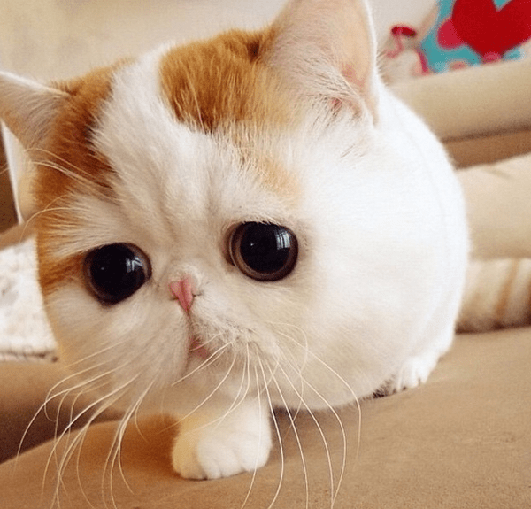 10 top Instagram cats