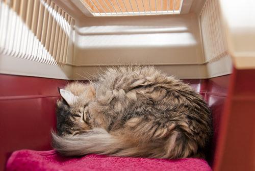 how to keep a cat calm during a bath