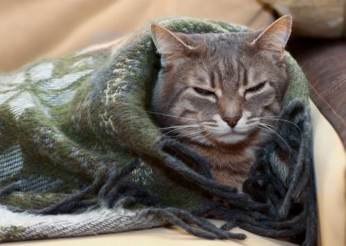 10 Symptoms Of Feline Immunodeficiency Virus Fiv