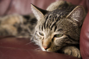 Declawing cats in ct