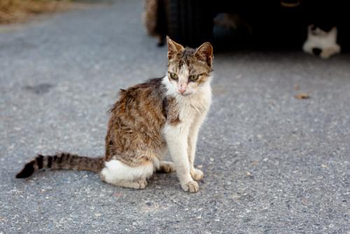 علائم بیماری ایدز گربه ها چی هست؟