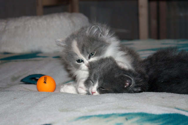 Sometimes all you need is a buddy. Image source: @Mel via Flickr
