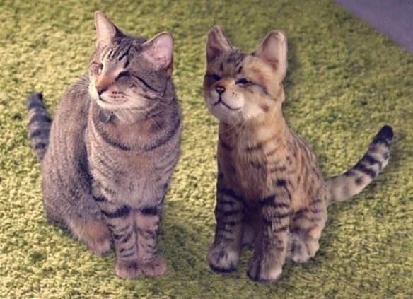 Image source: Cuddle Clones