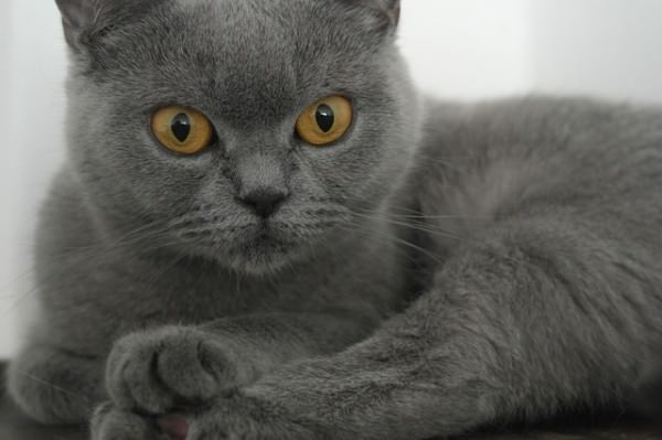 Most Popular Name For Cats In World