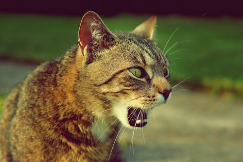 5 Reasons Why Your Cat May Be Coughing