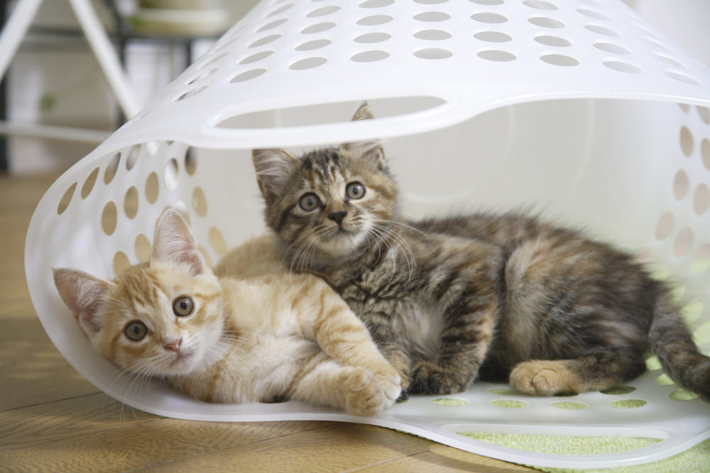 cat litter box tray