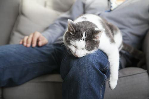 Benefits Of Adopting An Old Cat