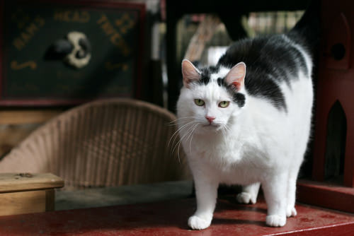 5 Ways You Might Be Shortening Your Cat's Lifespan ...