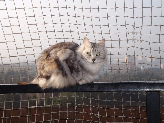 cat-284176_640