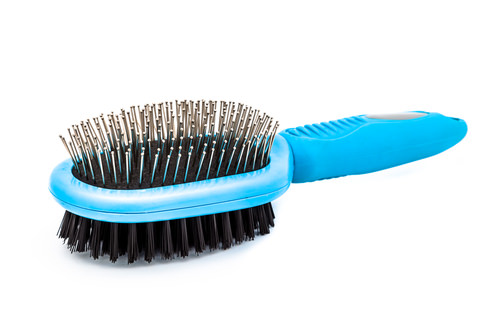 Grooming 101 What Type Of Brush Is Best For My Cat