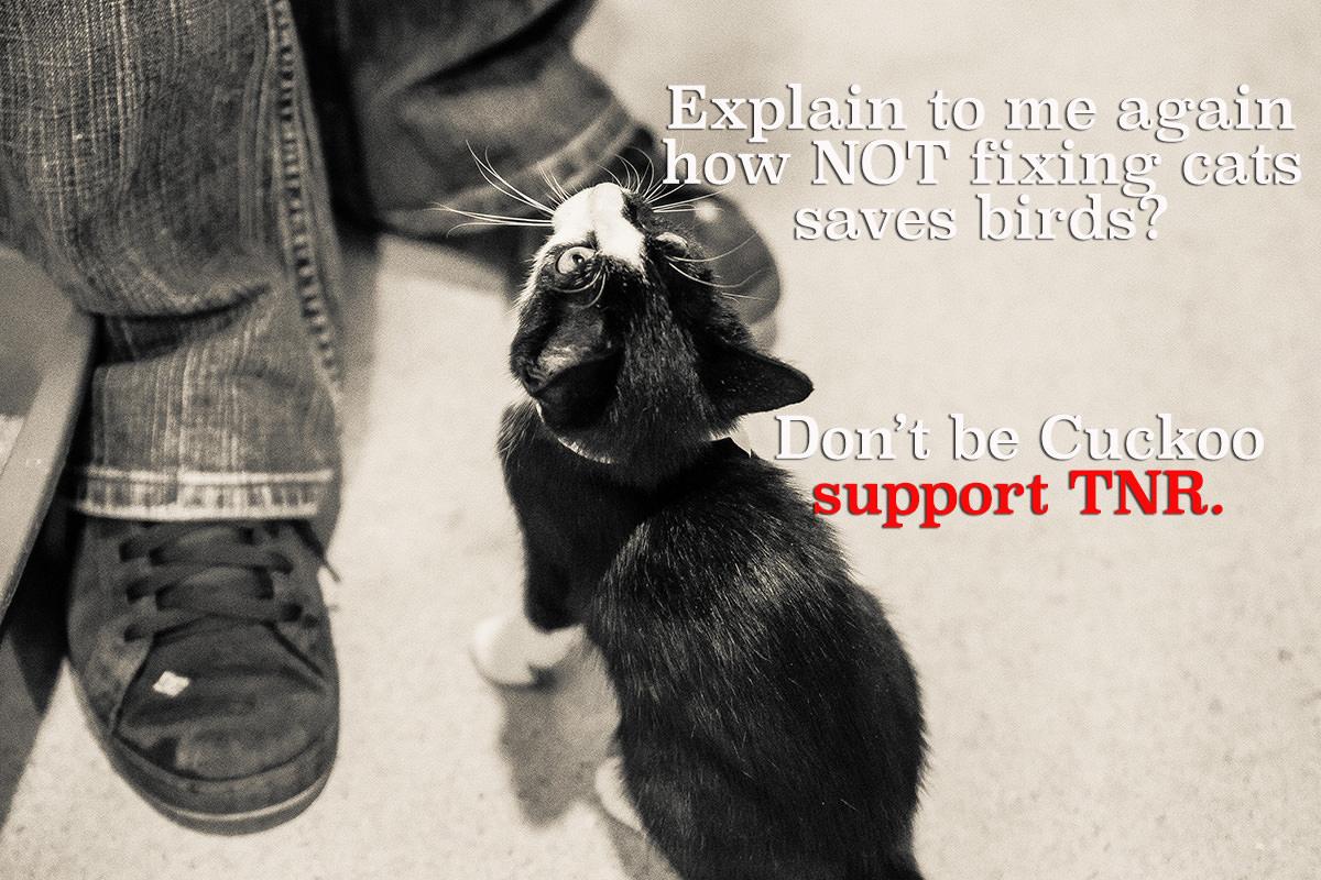 Image source: Kitty Bungalow Charm School