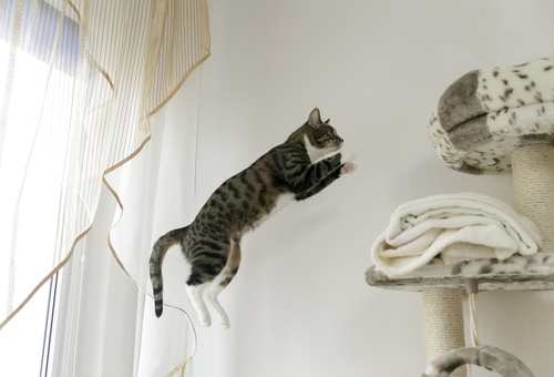 How to teach a kitten tricks