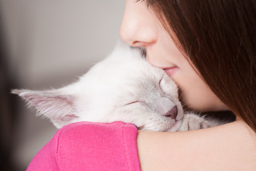 how to show affection to a cat