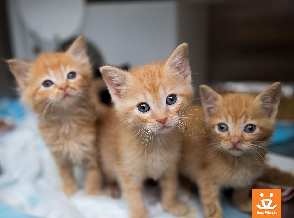 Kitten Season 1