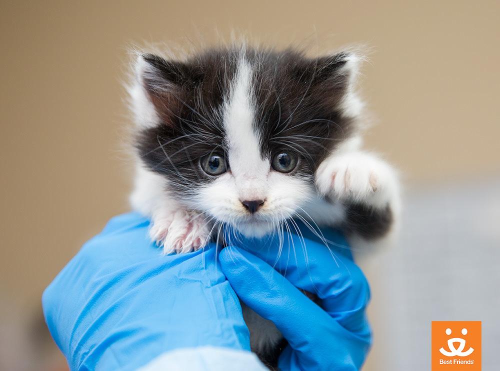 Kitten Season 3