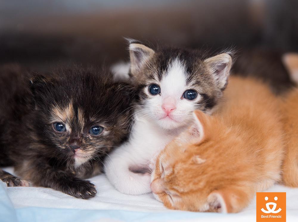 Kitten Season 5