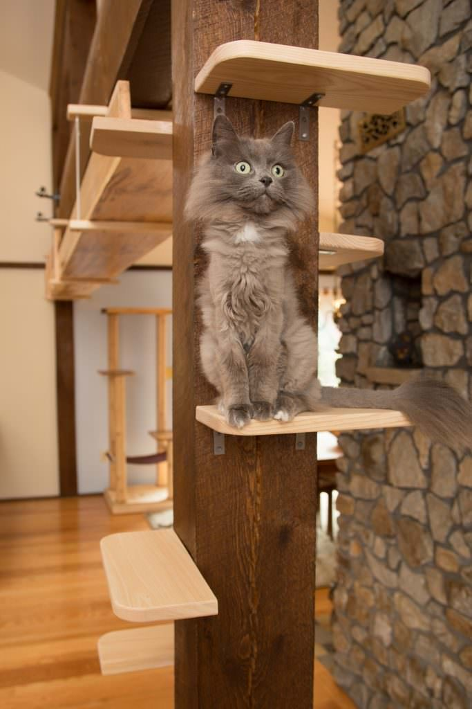 Image source: Mountain Pet Products