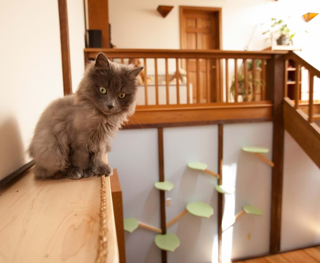 Picture of: Check Out The Before And After On This Crazy Catification Project