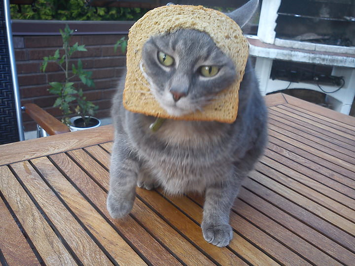 Morris was breaded