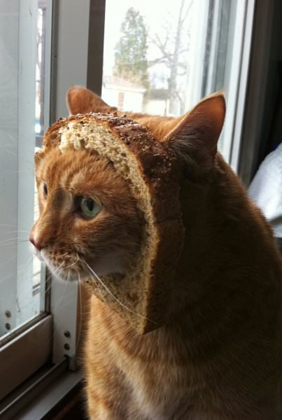 breaded and pondering life