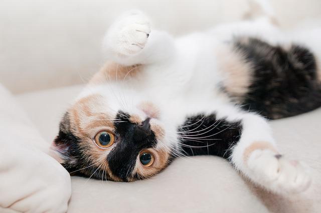 cat-649164_640-3