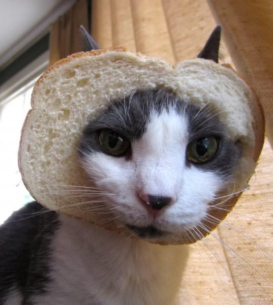 toby breaded