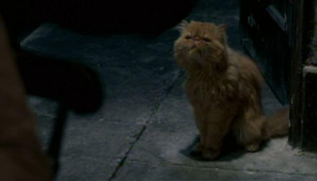 Image source: Cinemacats.com