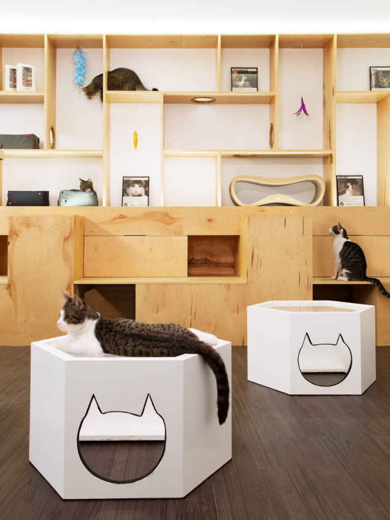 Image source: Sonya Lee Architect - Meow Parlour
