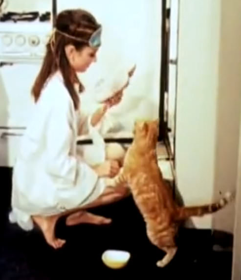 "Image source: ""Orangey with Audrey Hepburn in Breakfast at Tiffanys"" by Paramount Pictures - http://www.youtube.com/watch?v=eJJvjGKhscA. Licensed under Public Domain via Wikimedia Commons"