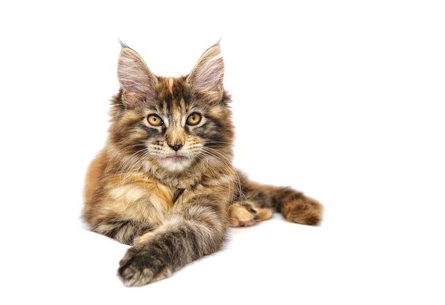 cat-694718_640