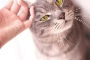Pet Insurance: Rip-Off Or Life-Saver? The Answer Will Change The Way You Think About Your Cat