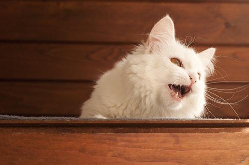how often should a senior cat pee