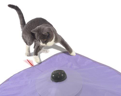 laundry detergent to remove cat urine