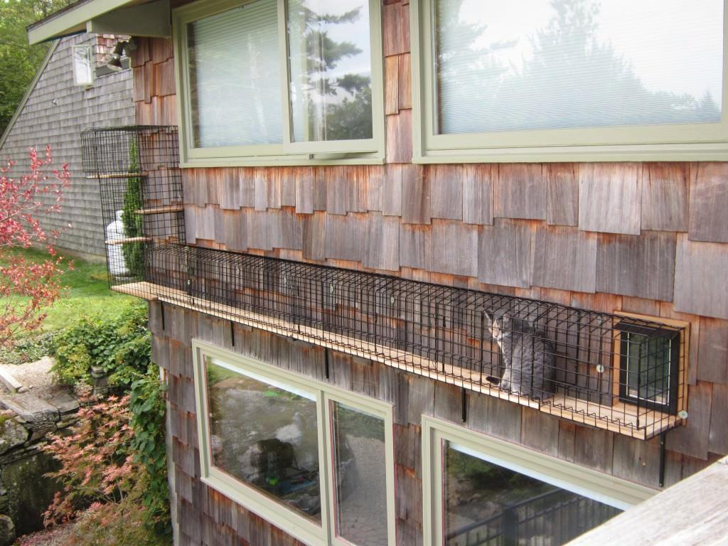 Image source: Catbitats.com