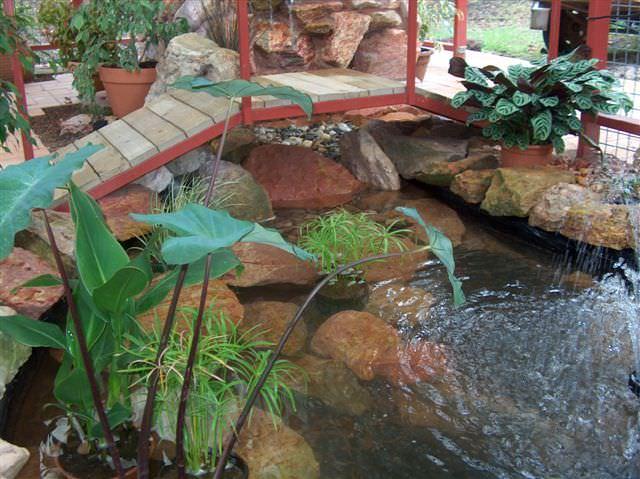 Image source: Catsofaustralia.com