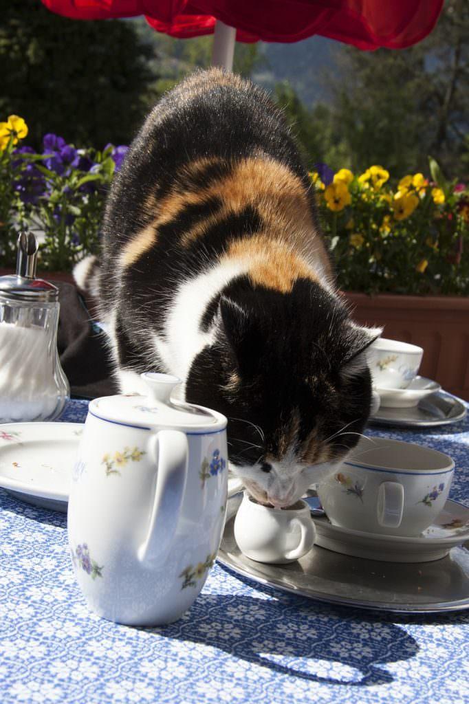 cat-114140_1280