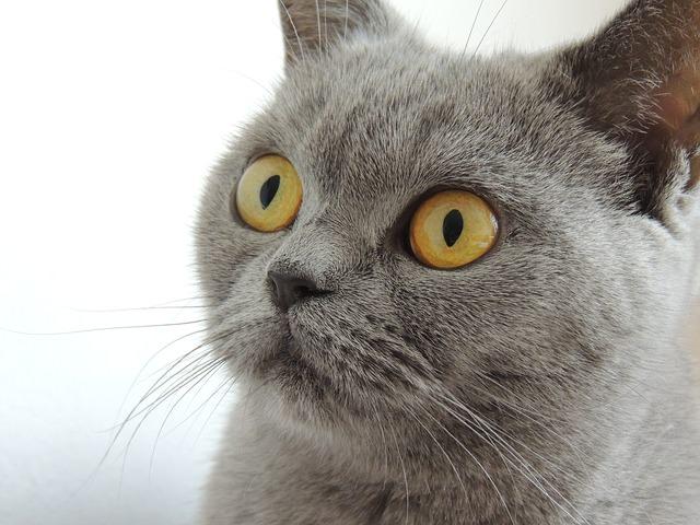 cat-179842_640