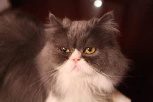 cat-681683_640