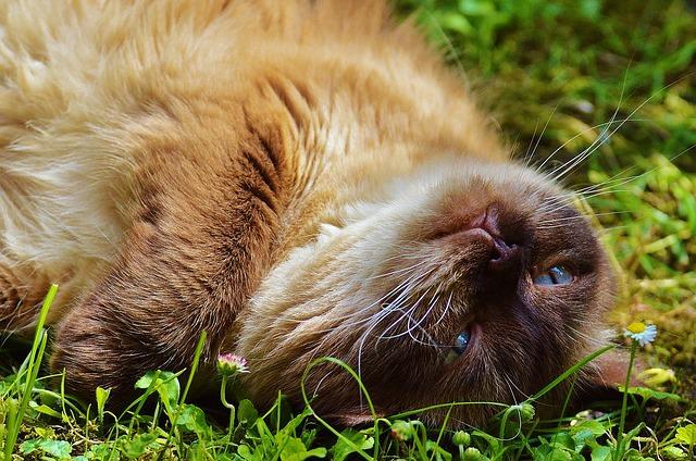cat-783704_640