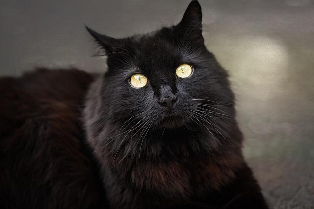 cat-837517_640
