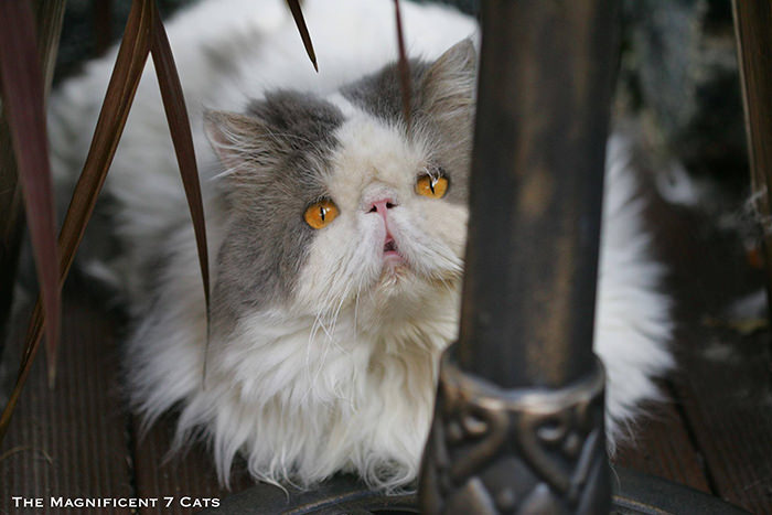 how to remove cat spray odor from wood