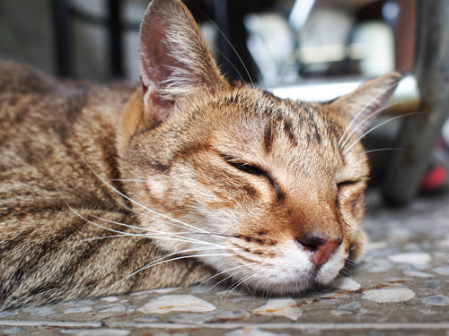 From The Vet: 6 Human Medications That Can Be Deadly For Cats If Eaten