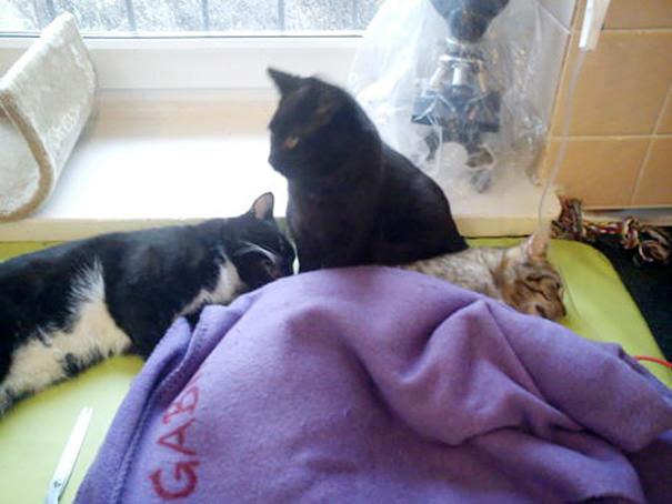 veterinary-nurse-cat-hugs-shelter-animals-radamenes-bydgoszcz-poland-9-1