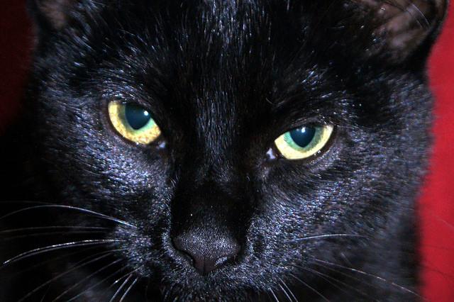 15 Unique Names For Your Black Cat