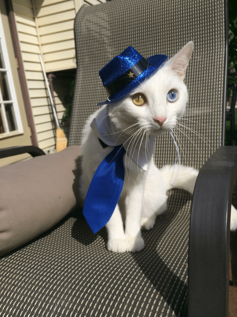 15 Silly Cats Wearing Hats iHeartCats